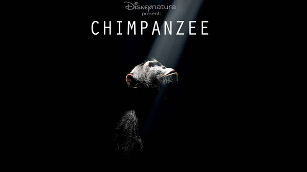 disneynature chimpanzee