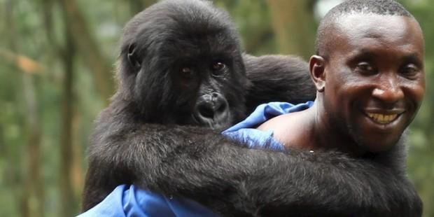 large_Virunga_2