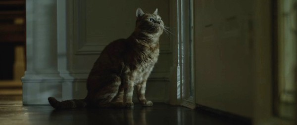 gone-girl-movie-screenshot-cat
