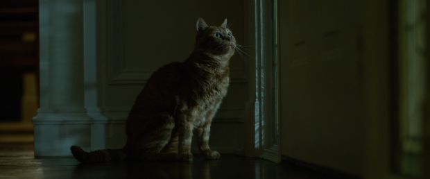 gone_girl_cat